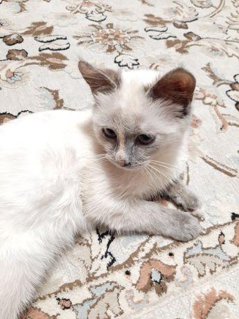 Віддам котика в хороші руки БЕЗКОШТОВНО