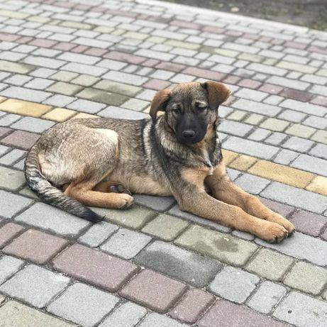 Щенок 4 месяца девочка