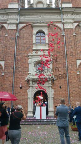 Niesamowite Pudło Prezent Balonowy z helem na Ślub-Wesele-180szt
