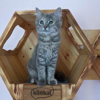 Котенок Сима ищет семью котенок котята кошеня кот кошка котеня кошеня