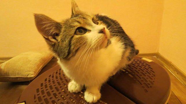 Подарите коту семью) Сделайте доброе дело