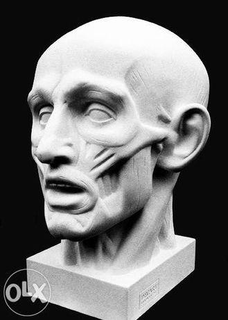 Скульптура Голова Экорше мышцы.