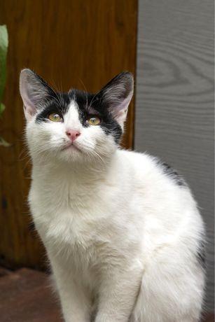Котик Холмс ищет семью