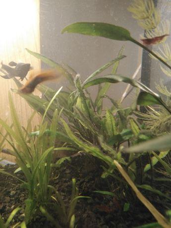 Sprzedam różne rośliny akwariowe