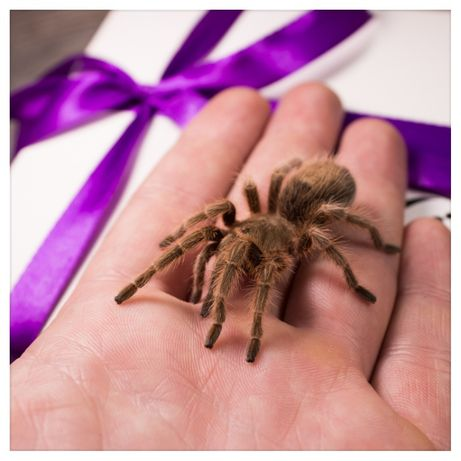 Арагог Бокс подарунок на день народження павук птахоїд+набор корм субс