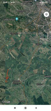 Земельна ділянка в селі Великий Кучурів