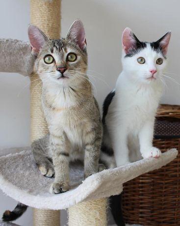 """Mimi i Pingu szukają wspólnego domu ! Fundacja """"Stawiamy na Łapy"""""""