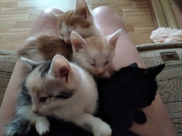 Красивые котики-детки в хорошие руки