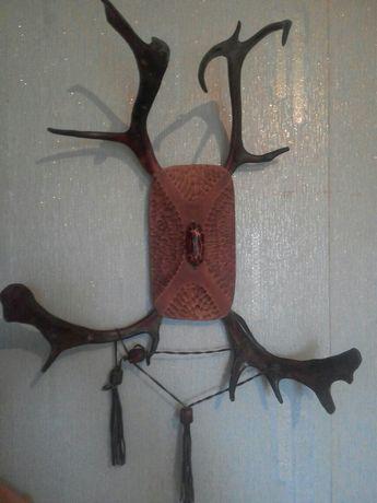 Рога камчатского оленя