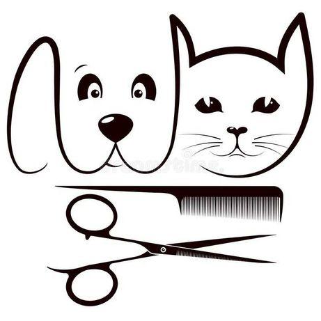 Groomer dla psów i kotów