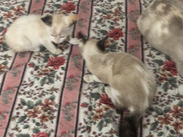 Dou gatinhos com 4 meses 1 macho 3 femeas
