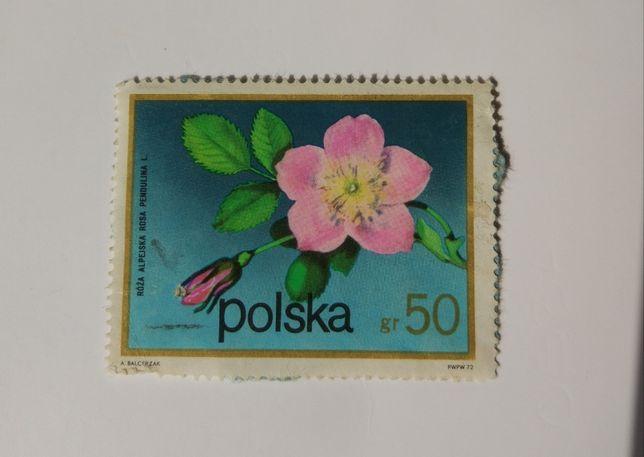 Znaczek pocztowy, róża alpejska.