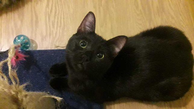 Черная кошечка Милли, 8 месяцев, стерилизована