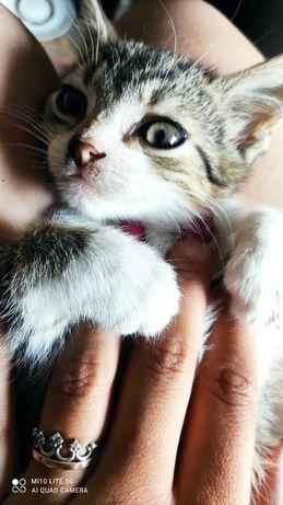 Кошеня, киця, котик. Безкоштовно