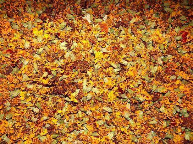 Квітки чорнобривців(  Цветы бархатцев)