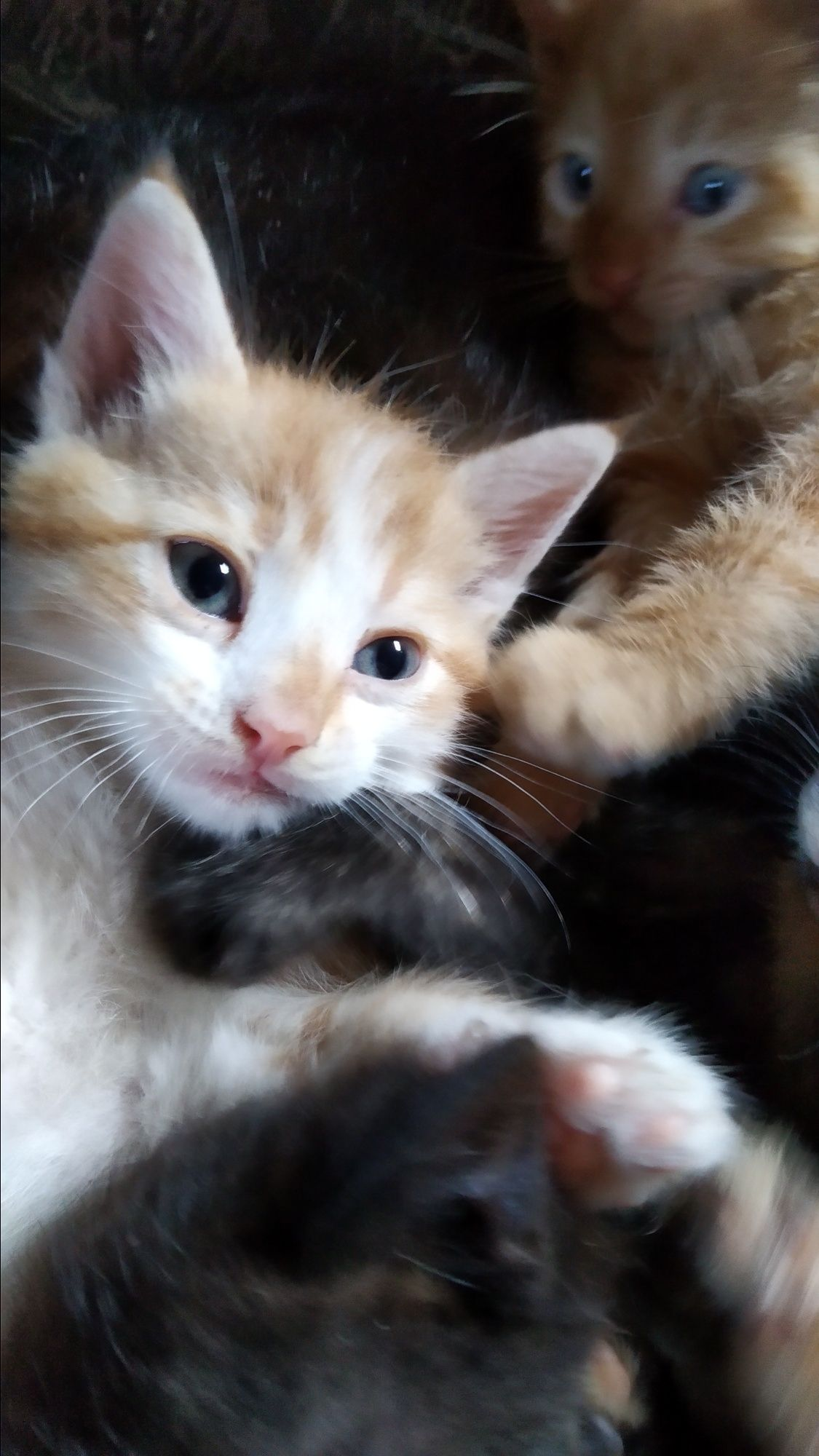 Красивые котята в хорошие руки