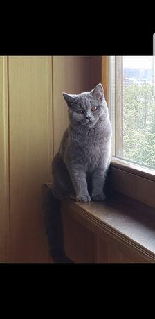 Взрослый молодой кот.