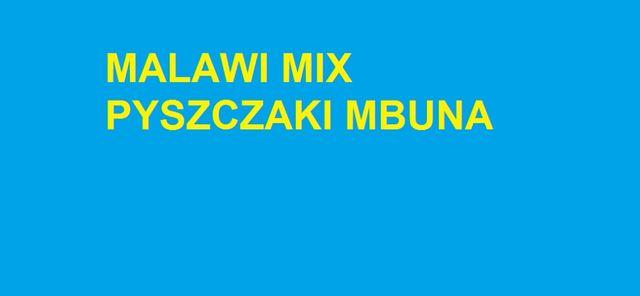 Pyszczaki Malawi Mix Mbuna Ostróda
