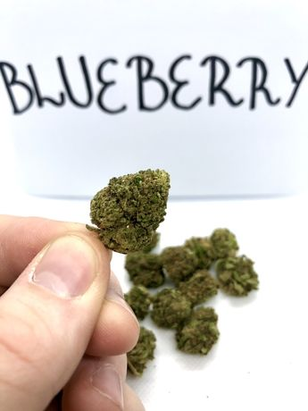 Susz CBD 50g Blueberry hurt/detal
