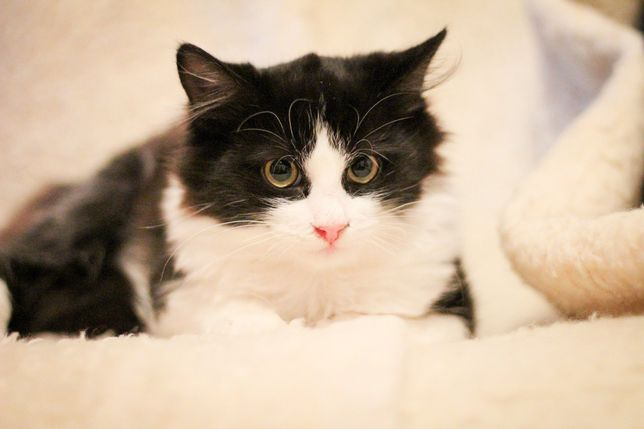 Котята мальчики ищут дом 5-6 месяцев, котенок, котик