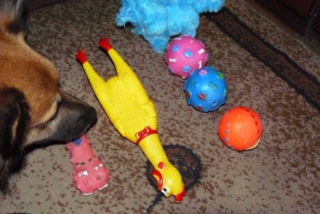 zabawki dla psa zestaw gratis przekąski pedigree