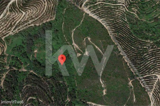Terreno de 6,25 ha com Ruína de 72m2