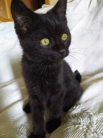 Кошеня Черрі в пошуку родини