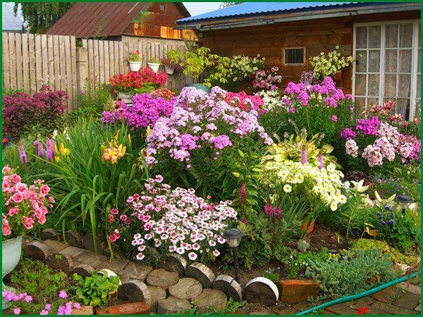 гвоздика турецкая (семена) микс цветов 150 семян