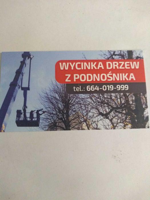 Wycinka drzew z podnośnika Białystok - image 1