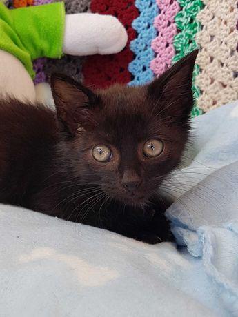 Mały kotek do adopcji