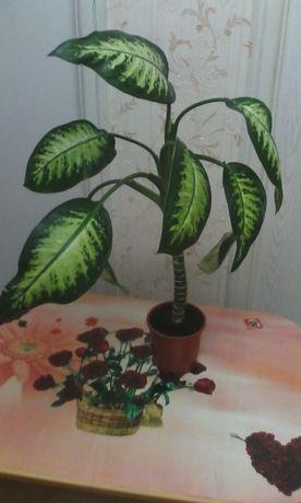 Взрослое растение Диффенбахии.