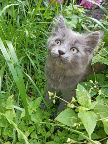 Кошечка игривая, самостоятельная в хорошие руки