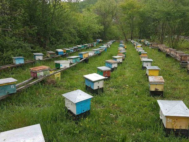 Украинская степная порода Весной 2021г. Пчелопакет.