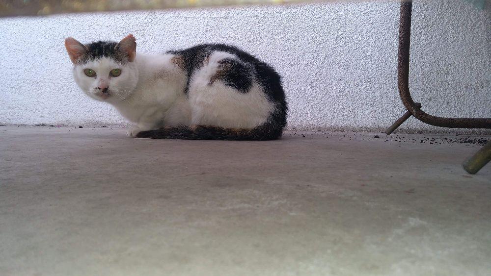 Umrzeć, tego nie robi się kotu. Studnia zwana bezdomnością. Pabianice - image 1