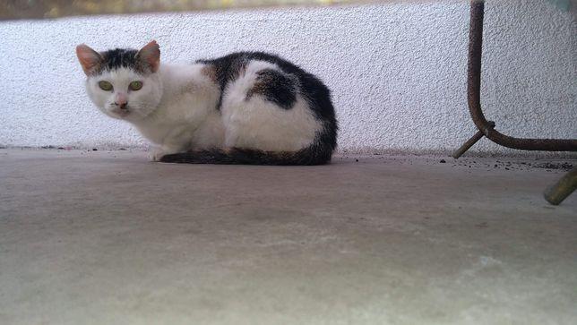 Umrzeć, tego nie robi się kotu. Studnia zwana bezdomnością.