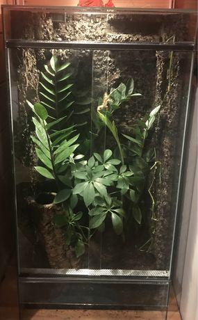 Terrarium dla gekona orzesionego + gekon