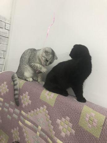 Передержка для кошечки и кролика