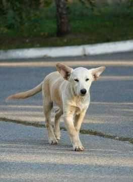 Срочно ищут дом щенки - белый мальчик, три темные девочки
