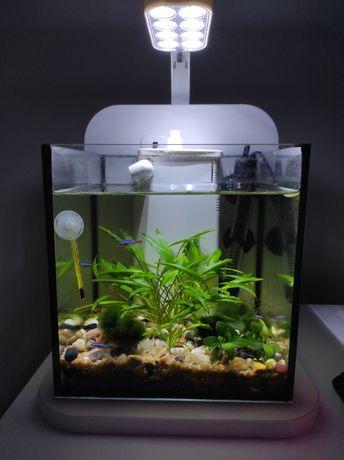 2 Aquários nano 10 litros aquatlantis