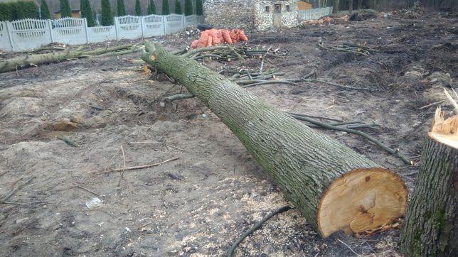 Drzewo lipa 6 metrow, rezerwacja do 19.06