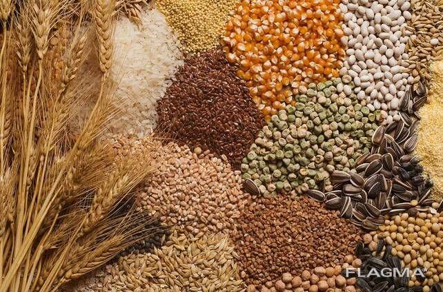 Закупка зерновых, бобовых, масличных!!