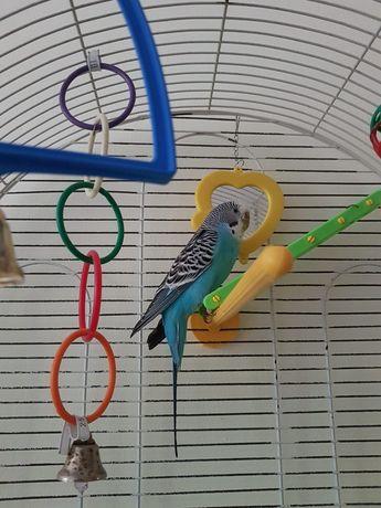 Волнистый попугай с клеткой и игрушками !