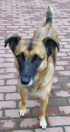 Beza - bardzo miła sunia, uwielbia spacery, bieganie i leniuchowanie.