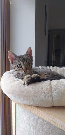Koteczka Marcysia do adopcji