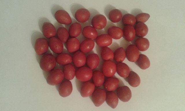 муррайя свежие ягоды свіжа ягода мурайя мурая