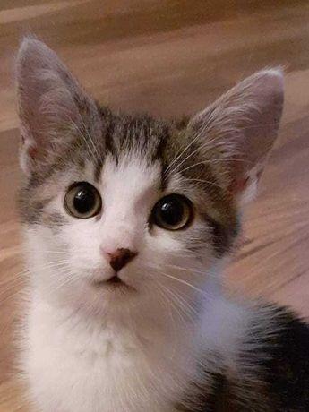Słodka - 3miesięczna kotka do adopcji