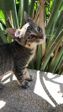 4 Gatinhos para adoção!