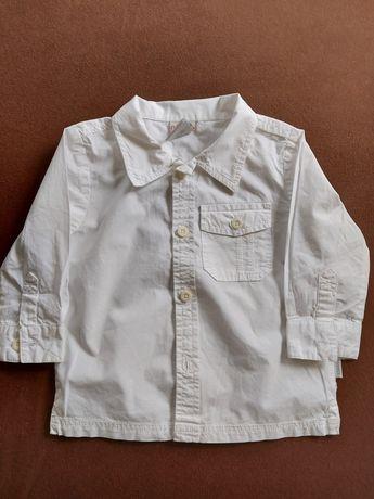 Koszula coccodrillo 74