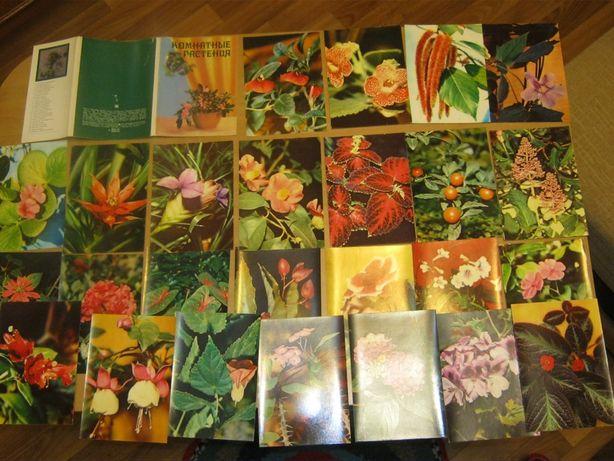 """Набор открыток """"Комнатные растения"""""""