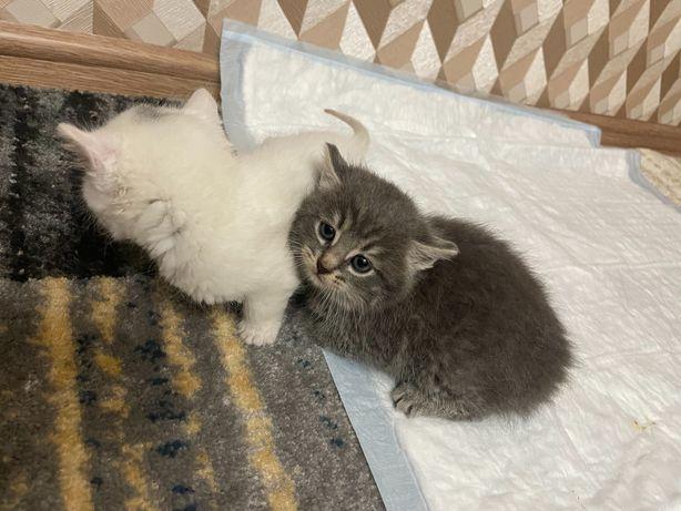 Маленькі котенята